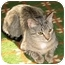 Photo 1 - Domestic Shorthair Cat for adoption in Fairbury, Nebraska - Philou