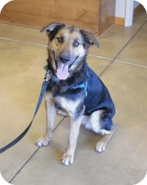 Shepherd (Unknown Type) Mix Dog for adption in Wickenburg, Arizona - Annie