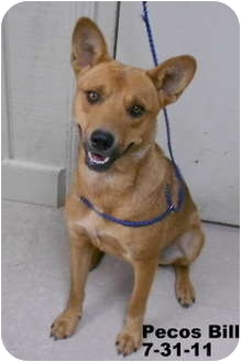 Australian Cattle Dog Mix Dog for adption in Leitchfield, Kentucky - Pecos Bill