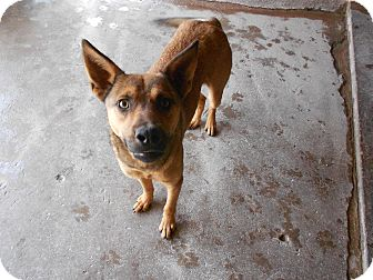 German Shepherd Dog Mix Dog for adption in San Diego,, California - David