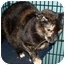 Photo 1 - Domestic Shorthair Cat for adoption in Leonardtown, Maryland - Samantha Raven