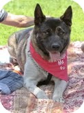 Akita/Shepherd (Unknown Type) Mix Dog for adption in Van Nuys, California - LOST $REWARD$ CLEA