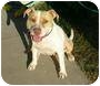 Adopt A Pet :: Madonna - Bellflower, CA