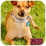Photo 1 - Dachshund/Chihuahua Mix Dog for adoption in Marina del Rey, California - Emvie
