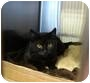 Adopt A Pet :: Shadow - Raritan, NJ