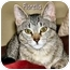 Photo 1 - Domestic Shorthair Cat for adoption in Fairbury, Nebraska - Fiorella