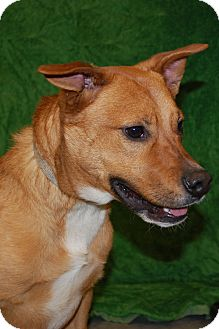 Terrier (Unknown Type, Small) Mix Dog for Sale in London, Kentucky - Boone