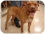 Adopt A Pet :: Petunia - Crosspost - North Middletown, NJ