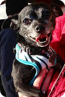 Chihuahua Mix Dog for adption in San Diego, California - Daisy