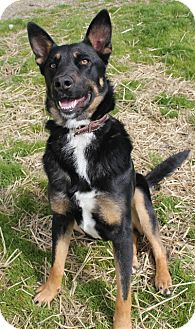 Shepherd (Unknown Type) Mix Dog for Sale in Grants Pass, Oregon - Jada