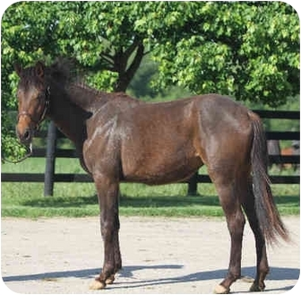 Mustang Mix for Sale in Nicholasville, Kentucky - Sophie