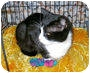 Adopt A Pet :: Sheila - Colmar, PA