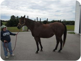 Thoroughbred Mix for Sale in Lexington, Kentucky - Daisy Mae