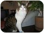 Adopt A Pet :: Lexington - Mississauga, Ontario, ON