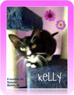 Domestic Shorthair Cat for Sale in Mobile, Alabama - Kelly