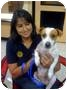 Adopt A Pet :: Wishbone - Fowler, CA