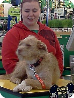 Terrier (Unknown Type, Medium) Mix Dog for adption in Beckley, West Virginia - Red