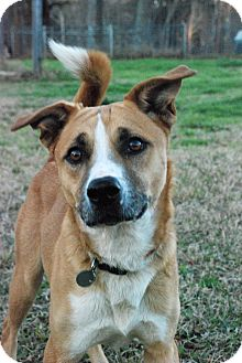 Shepherd (Unknown Type)/Spitz (Unknown Type, Medium) Mix Dog for adption in Greensboro, Georgia - McKinley