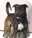 Shepherd (Unknown Type)/Hound (Unknown Type) Mix Dog for adption in Tinton Falls, New Jersey - Spike