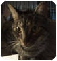 Adopt A Pet :: Tabby Toes - New York, NY