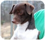 Adopt A Pet :: Myles - Sale Creek, TN