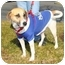 Photo 3 - Foxhound/Pointer Mix Dog for adoption in Richmond, Virginia - Sweet Pea*Foster me