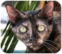 Adopt A Pet :: Trixie - Naples, FL