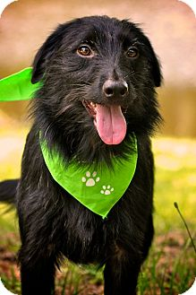 Terrier (Unknown Type, Medium)/Deerhound Mix Dog for Sale in Wilmington, Delaware - Mae Mae