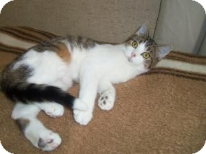 Domestic Shorthair Cat for adoption in Medford, Wisconsin - GRETCHEN