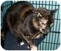 Adopt A Pet :: Samantha Raven - Leonardtown, MD