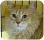 Adopt A Pet :: Oscar - Richmond Hill, ON