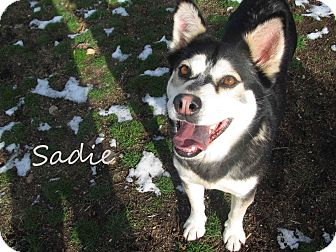 Husky Mix Dog for Sale in Hamilton, Montana - Sadie