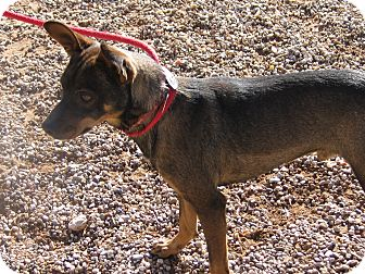 Terrier (Unknown Type, Small) Mix Dog for adption in Post, Texas - Lee