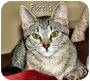 Adopt A Pet :: Fiorella - Fairbury, NE