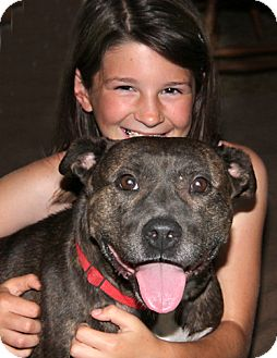 American Staffordshire Terrier Mix Dog for adption in Nashville, Tennessee - Willa