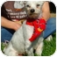 Photo 3 - Maltese Dog for adoption in Van Nuys, California - Happy
