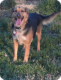 German Shepherd Dog/Border Collie Mix Dog for adption in Hagerstown, Maryland - Lily Bug