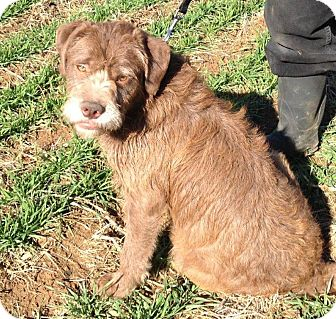 Terrier (Unknown Type, Medium)/Labrador Retriever Mix Dog for Sale in Russellville, Kentucky - Myra