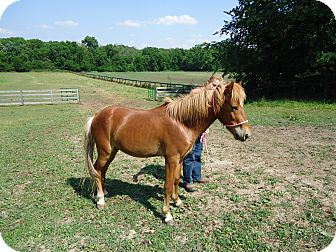 Pony - Other Mix for adoption in Marengo, Ohio - Peanut