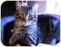 Adopt A Pet :: Striker - Mississauga, Ontario, ON