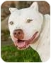 Adopt A Pet :: Paloma - Bellflower, CA