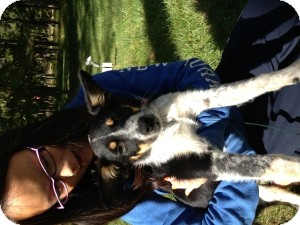 Australian Cattle Dog/Australian Shepherd Mix Puppy for Sale in Marlton, New Jersey - Baby Scout