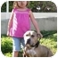 Photo 4 - American Pit Bull Terrier/American Staffordshire Terrier Mix Dog for adoption in Bellflower, California - Rosie