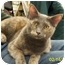 Photo 1 - Domestic Shorthair Cat for adoption in Sacramento, California - Misty W