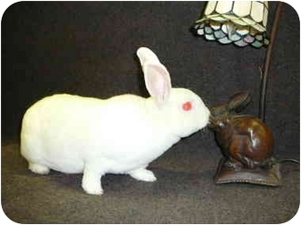 Mini Rex Mix for Sale in Newport, Delaware - Alec