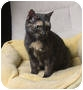 Adopt A Pet :: Natashia (KC) - Little Falls, NJ
