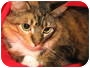 Adopt A Pet :: MAYBELLE/Adopted!! - Germantown, MD