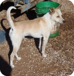 Terrier (Unknown Type, Medium) Mix Dog for adption in Post, Texas - Rex