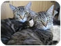 Adopt A Pet :: Kenzie and Tira - Long Beach, CA