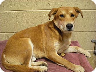 Cattle Dog Mix Dog for adption in Wickenburg, Arizona - Kirby